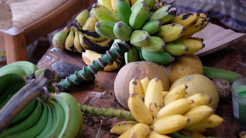 banane panier-producteur-miel-produit-local-ile-reunion-lareunion-bio-legumes-fruits-bio