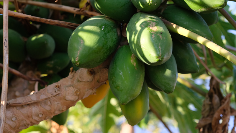 panier-producteur-miel-produit-local-ile-reunion-lareunion-bio-legumes-fruits-bio